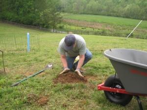Planting a Cab Franc vine