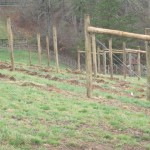 Newly-installed trellis posts