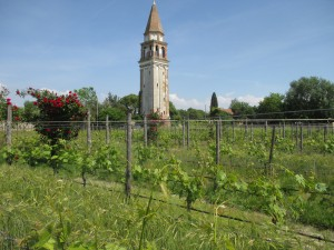 The vineyard inside the medieval gates on Mazzorba.